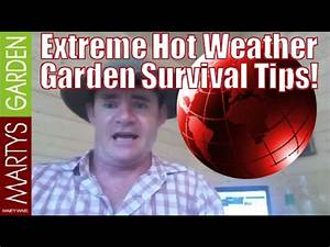Extreme Hot Weather Garden Survival Tips - YouTube