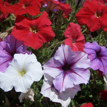 flowers    p    flowers