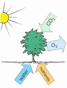 2. The Terrestrial Carbon Cycle — geogg124 1.0 documentation