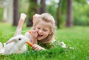 Haustiere Für Kinder : sind kaninchen die geeignete haustiere f r kinder ~ Orissabook.com Haus und Dekorationen