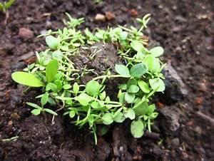 Kokos Blumenerde Für Welche Pflanzen : zus tzliche wurmfarm schichten wurm cafe can o worms ~ Orissabook.com Haus und Dekorationen