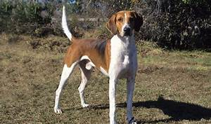 Here Are the 10 Best Hunting Dog Breeds