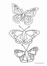 Butterfly Coloring Pages Butterflies Drawing Drawings Flying Printable Cycle Getdrawings Clipartqueen Patterns Wings Popular sketch template