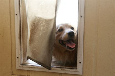 puppy window seat    diy
