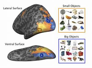 All things big and small: the brain's discerning taste for ...