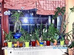 Orchidee Vanda Pflege : pflege blaue vanda orchidee mein sch ner garten forum ~ Lizthompson.info Haus und Dekorationen