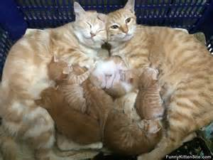 lots of cats baby animal pictures photos memes