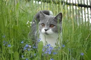 Katze Im Garten Begraben : so erschaffen sie ein gartenparadies f r katzen ~ Lizthompson.info Haus und Dekorationen