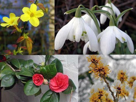 colourful plants  winter garden boldskycom