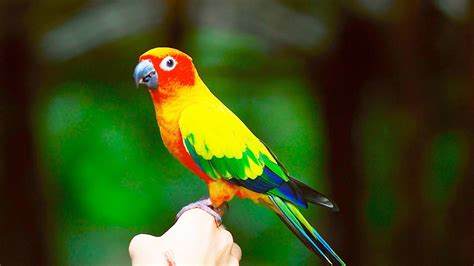 Picture Of A Bird Bdfjade
