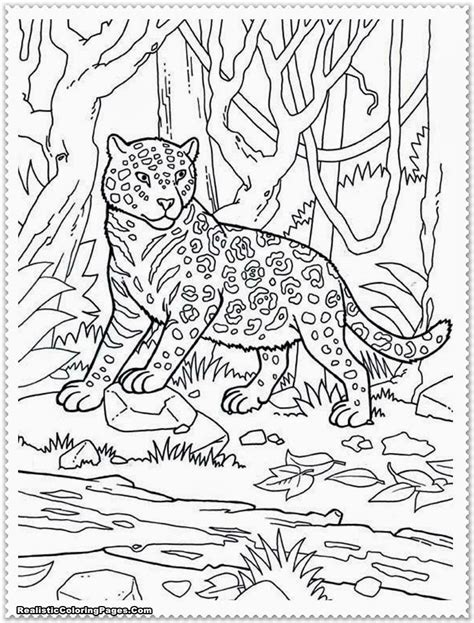 Coloring Pages Animals by Safari Coloring Pages Bestofcoloring