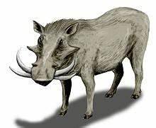 Metridiochoerus - Wikipedia  Metridiochoerus