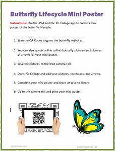 Ipad Butterfly Lifecycle