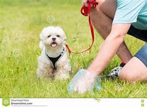 Picking Up Dog Poop Stock Photo - Image: 72249414