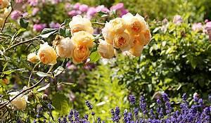 Garten Blumen Pflanzen : blumen und pflanzen schneider floristik in pfronten garten ~ Markanthonyermac.com Haus und Dekorationen