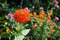 sun loving shrubs Revive your garden with these sun-loving plants - Houston ...
