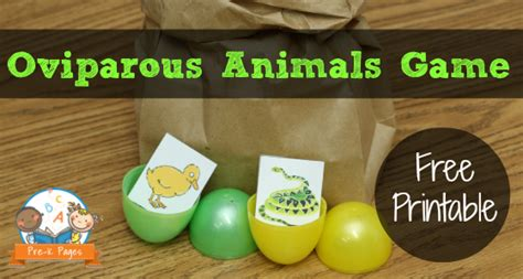 learning about eggs 384 | oviparous animals free printable