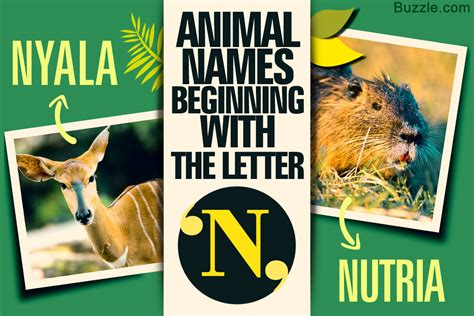 fun facts  pictures  animals  names