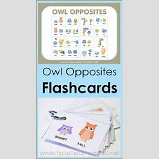 Owl Opposites Flashcards  Free Printable 1+1+1=1