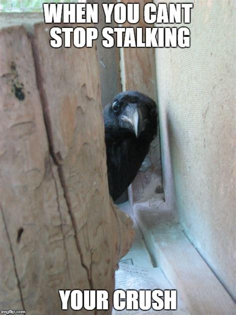 Crow Meme - peekaboo crow imgflip