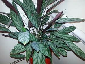 Houseplant, Identification, And, Care