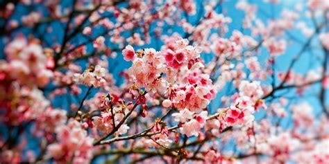printemps pour quoi la saison débute le 20 mars