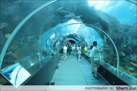 sea aquarium underwater world s e a aquarium singapore review thesmartlocal