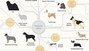 A Wonderful Diagram Of Dogs Featuring 181 Different Dog Breeds