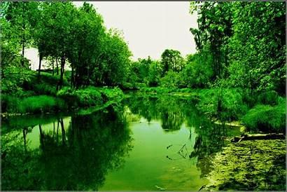 Hijau Pc Nature Pond Backgrounds Laptop Wallpepar