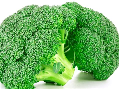 cuisine brocolis brocolis recettes de brocolis cuisine actuelle