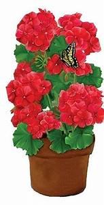 100 best ~ Geraniums ~ images on Pinterest | Geraniums ...