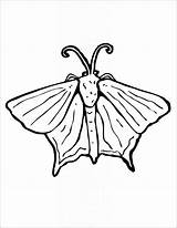 Moth Coloring Template Comments sketch template