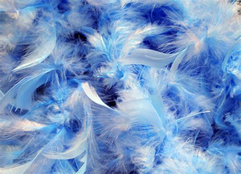 feather background blue feathers background free stock photo domain