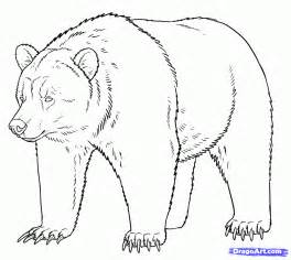 How to Draw Grizzly Bear Drawing