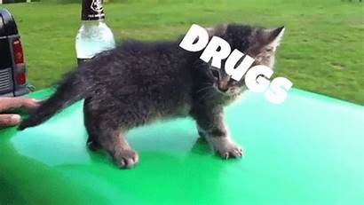 Falling Cat Drunk Gifs Drugs Giphy Cats