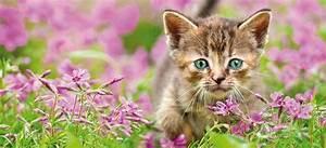Balkonschutz Für Katzen : erstaustattung f r katzen das futterhaus ~ Eleganceandgraceweddings.com Haus und Dekorationen