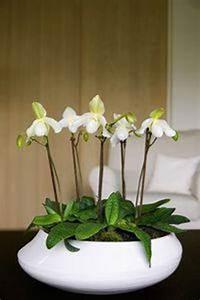 Grand Bac Pour Orchidées : des orchid es blanches voir ~ Melissatoandfro.com Idées de Décoration