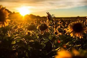 Download The Beautiful Flower Bunch Wallpaper Iranews