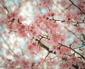 Pink Flowers Tumblr Photography Hd Images 3 HD Wallpapers ...