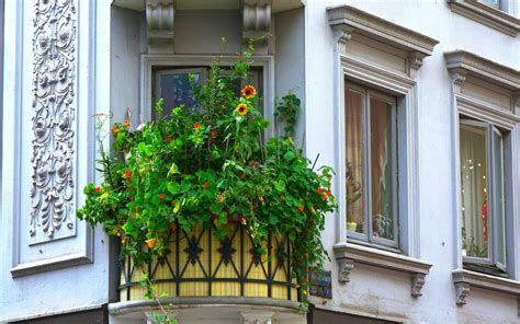 Pflanzen Als Sichtschutz Für Terrasse by Pflanzen Als Sichtschutz F 252 R Terrasse Und Balkon Baukram