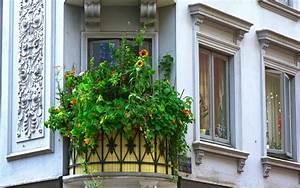 Sichtschutzpflanzen Für Terrasse : pflanzen als sichtschutz f r terrasse und balkon baukram ~ Indierocktalk.com Haus und Dekorationen