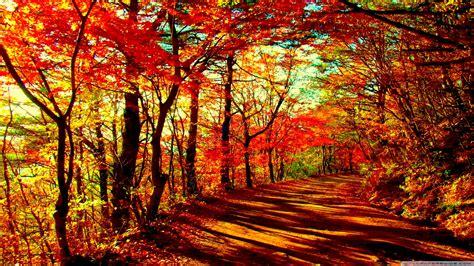 Autumn Forest 4k Hd Desktop Wallpaper For • Dual Monitor