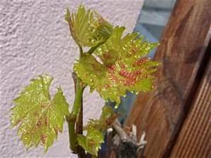 Kamelie Gelbe Blätter : krankheiten ~ Lizthompson.info Haus und Dekorationen