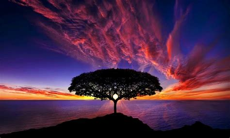 kumpulan gambar pohon wallpaper pemandangan indah animasi bergerak lucu terbaru