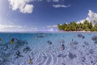 Tropical Fish Island Wallpapers Ocean Sea Seabed