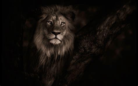 Top Beautiful Lion Photos, 14-4k Ultra Hd, B.scb Wallpapers