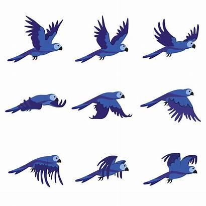 Bird Flying Parrot Animation Transparent Animated Birds