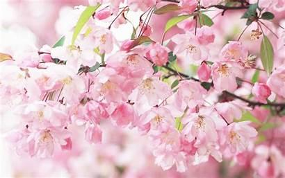 Spring Season Wallpapers Flowers Nature Desktop Flower