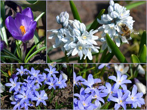 Pagaliau pavasaris :) | Aplinkos projektas