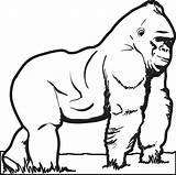 Gorilla Coloring Printable Animal Zoo Supplyme Outline Sheet Mountain Sheets Cartoon Animals Template Drawings Teacher Primates Crafts Pdf Mpmschoolsupplies sketch template